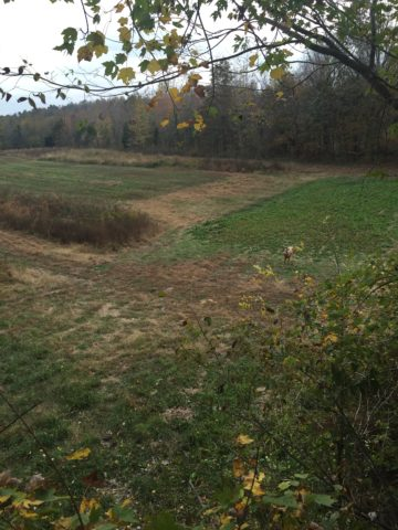 western kentucky trophy whitetail outfitting