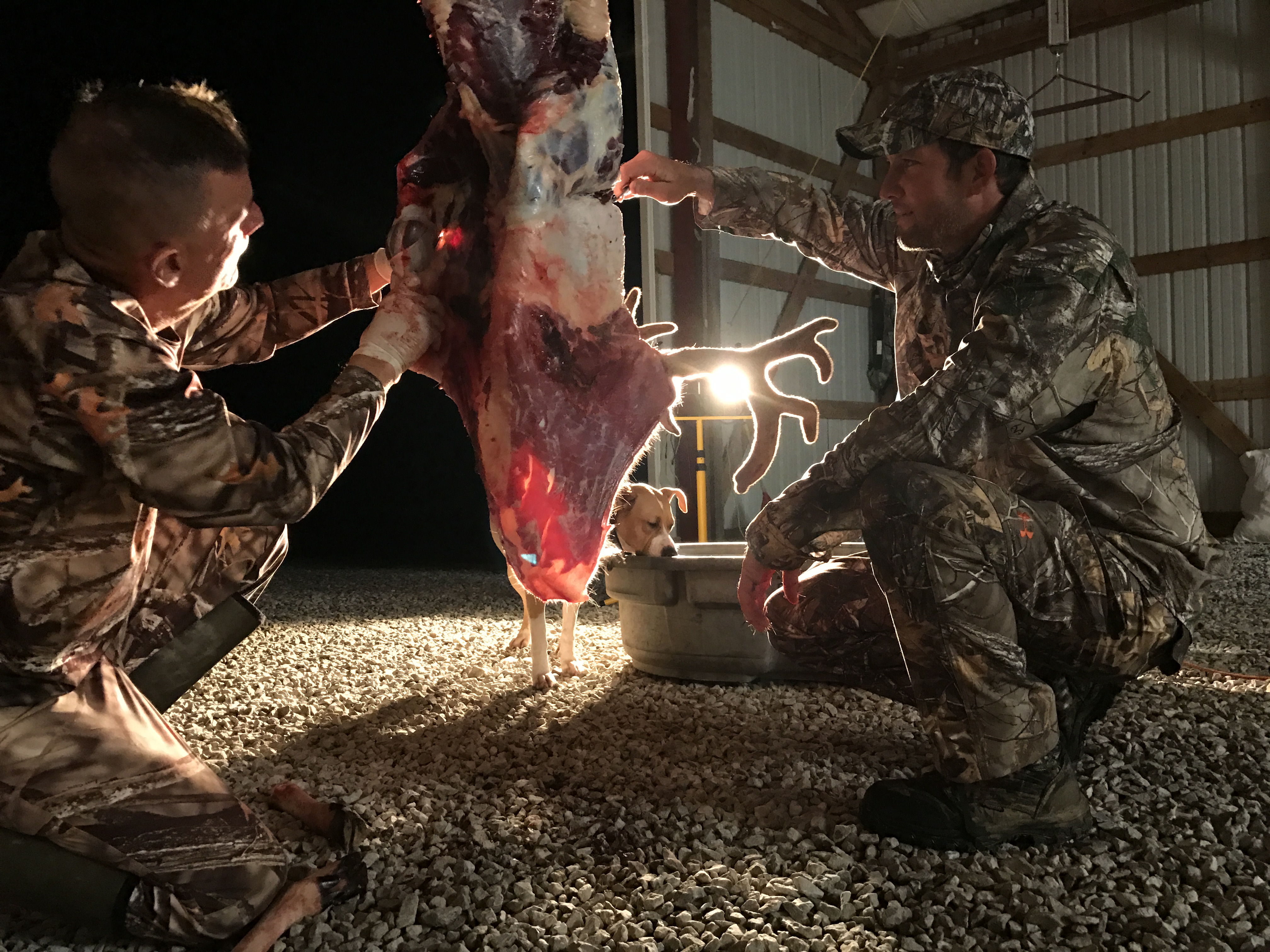 Trophy Whitetail Velvet Hunts of Western Kentucky